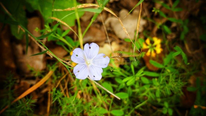 Bello fiore in foresta fotografie stock libere da diritti