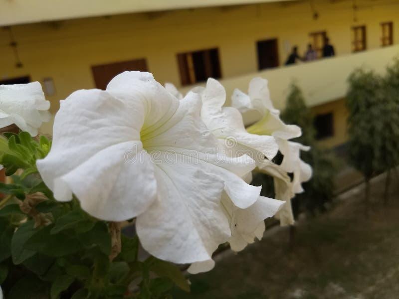 Bello fiore giallo bianco della natura fotografie stock libere da diritti