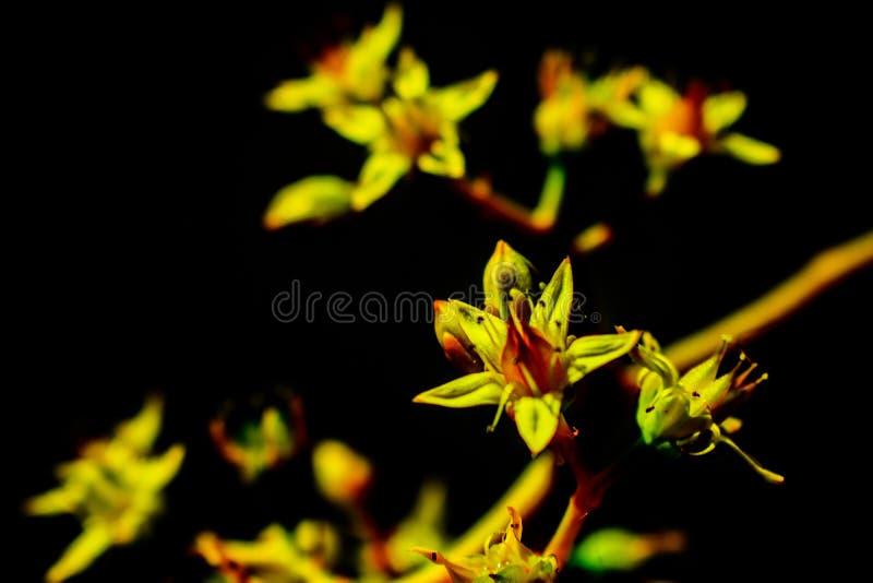 Bello fiore giallo Natura gialla fotografie stock libere da diritti