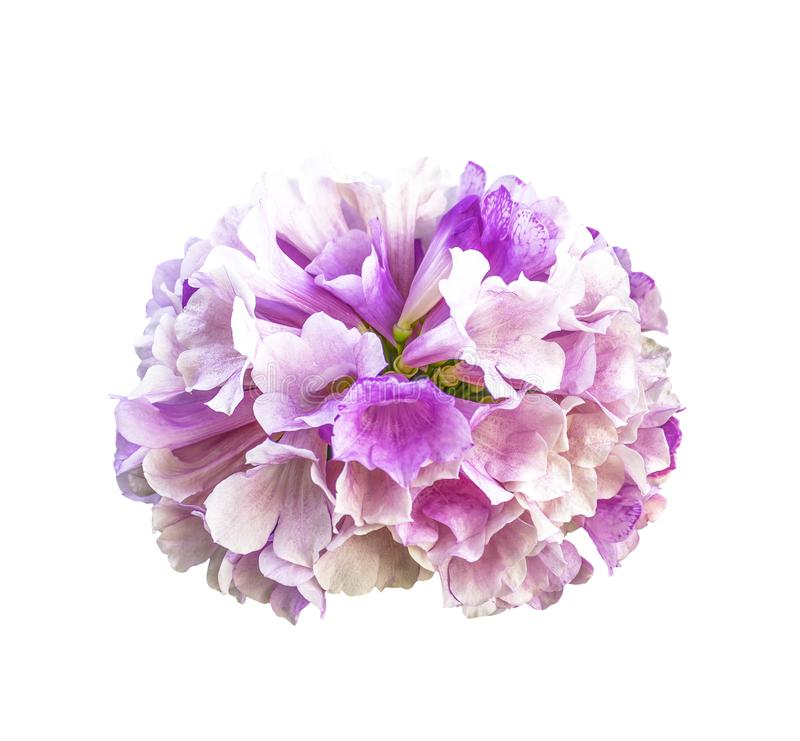 Bello fiore isolato su bianco fotografia stock