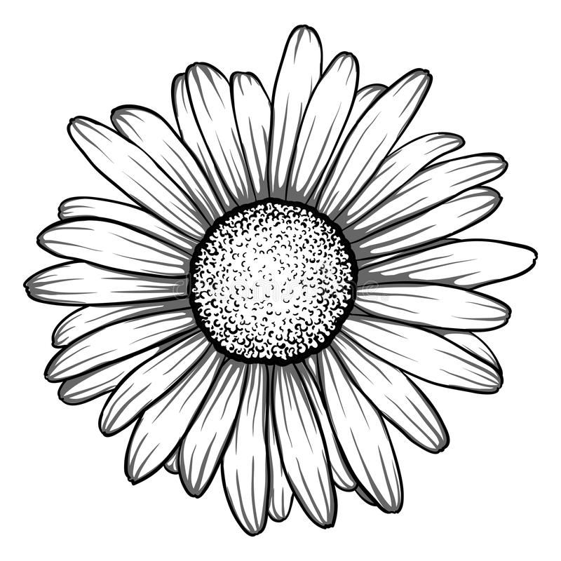 Bello fiore monocromatico e in bianco e nero della margherita illustrazione vettoriale