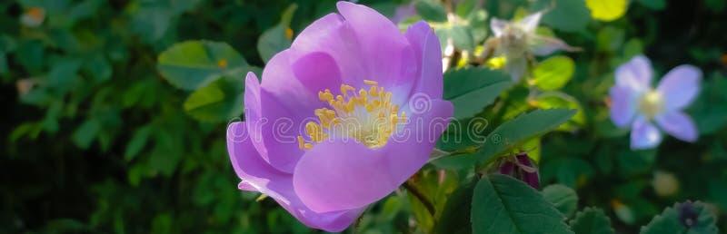 Bello fiore porpora fotografie stock