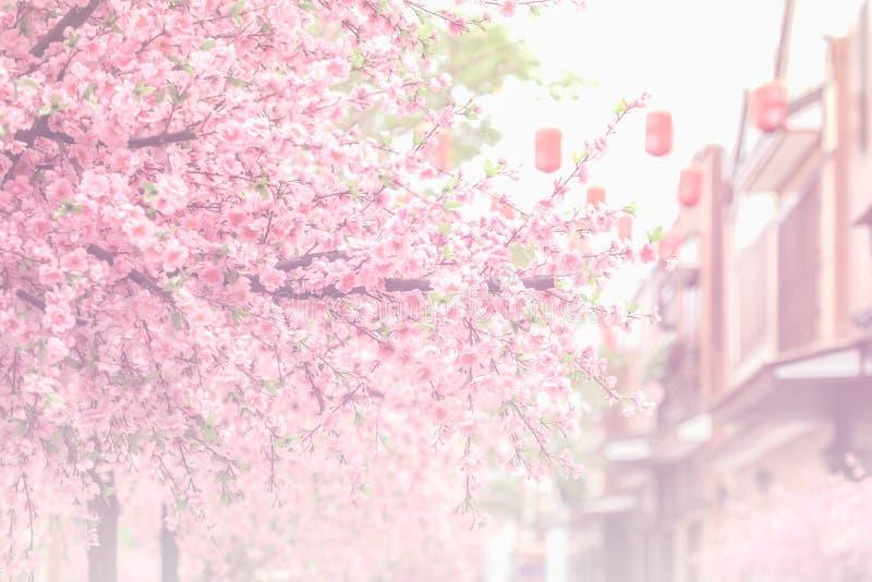Bello fiore rosa del fiore di ciliegia (Sakura) e PR molle del fuoco fotografia stock