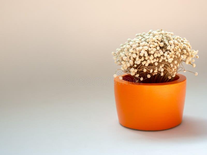 Bello fiore secco in piantatrice concreta rotonda arancio Vaso concreto dipinto per la decorazione domestica fotografie stock