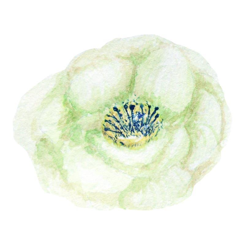 Bello fiore verde bianco dell'acquerello Isolato su priorit? bassa bianca illustrazione di stock