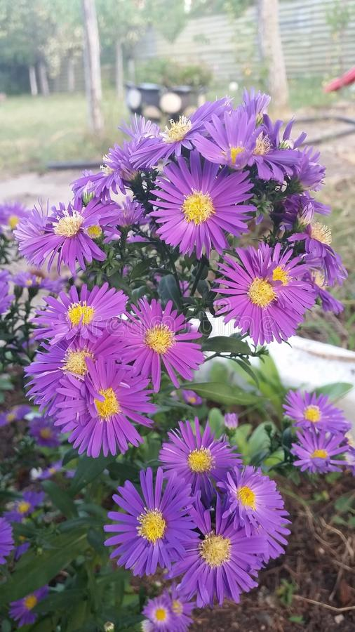 Bello fiore viola immagine stock