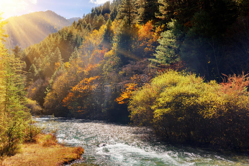 Bello fiume della montagna fra il legno di caduta Autumn Landscape immagine stock