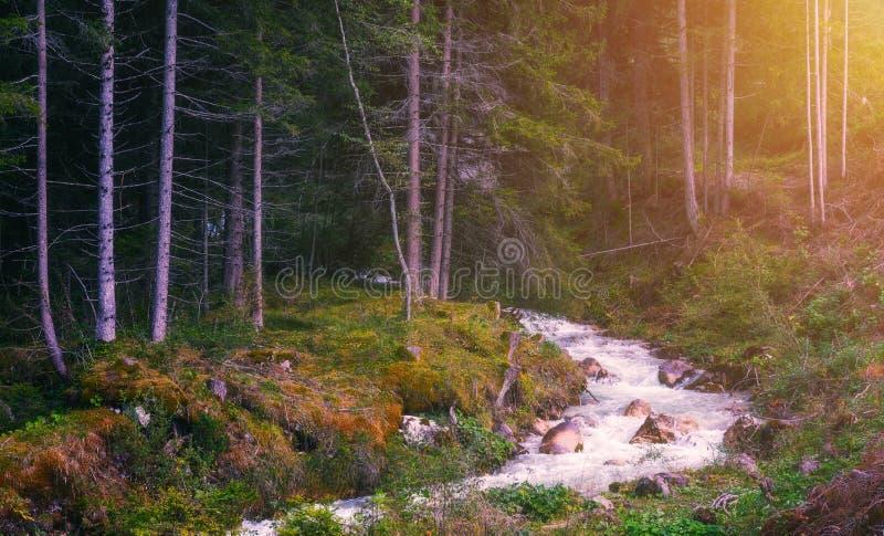 Bello fiume in natura della foresta Backgrou tonificato pacifico della natura immagine stock
