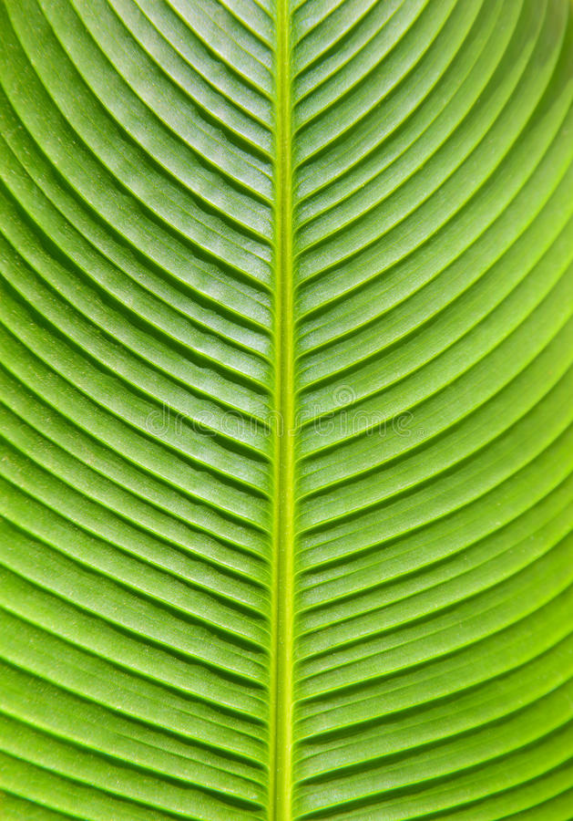 Bello foglio verde immagini stock