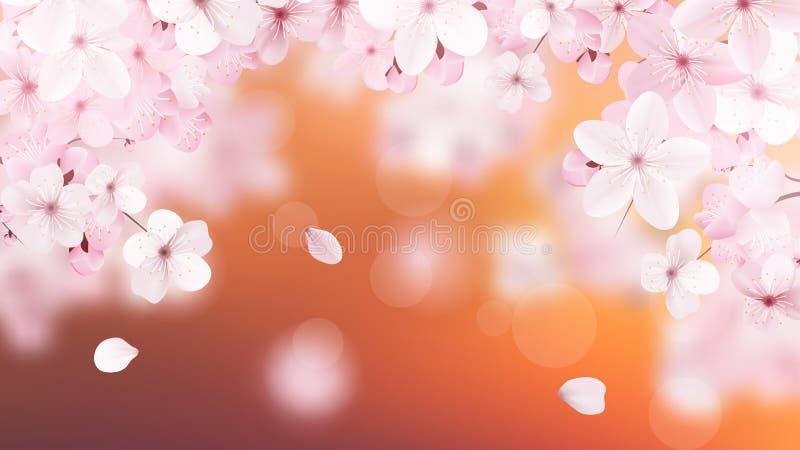 Bello fondo delicato con i fiori rosa-chiaro sboccianti di sakura con il posto per testo Progettazione floreale delicata realisti illustrazione vettoriale