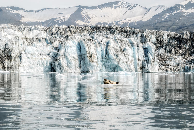 Bello fondo della laguna del ghiacciaio e guarnizione sveglia sull'Islanda fotografie stock