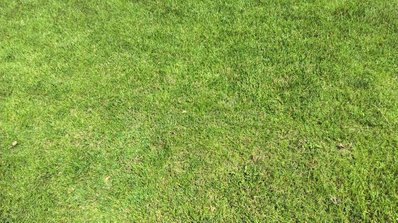 Bello fondo di giorno di estate della radura dell'erba del prato inglese fotografia stock libera da diritti