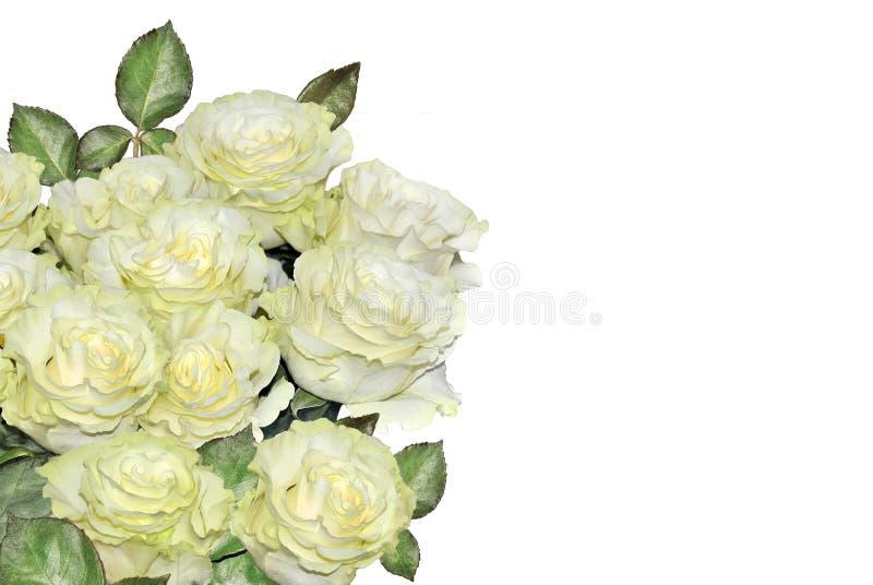 Bello fondo floreale con il mazzo delle rose bianche isolato su bianco fotografia stock