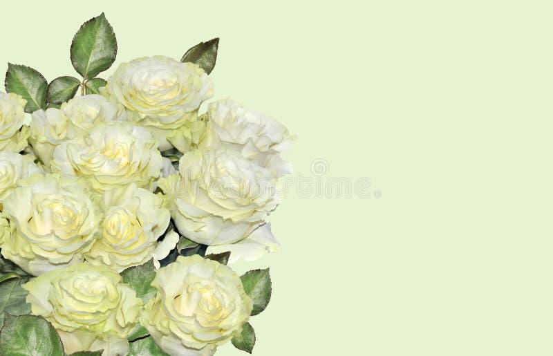 Bello fondo floreale con il mazzo delle rose bianche fotografie stock