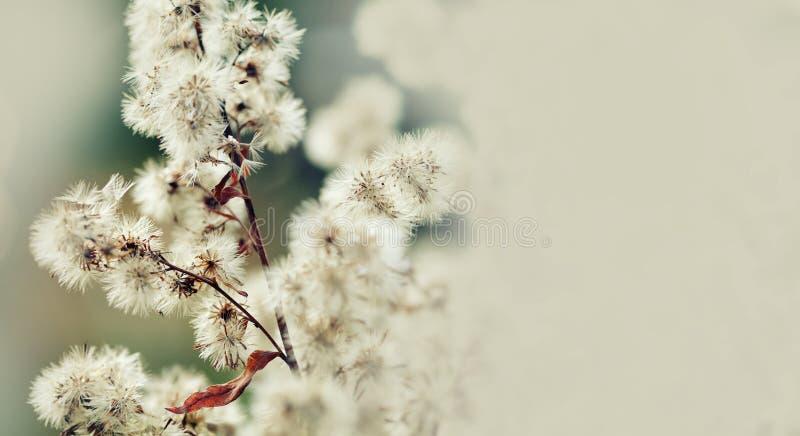 Bello fondo floreale del fondo… con i fiori variopinti Scena con i fiori lanuginosi, macro vista di natura morta di ora legale Pr immagini stock libere da diritti