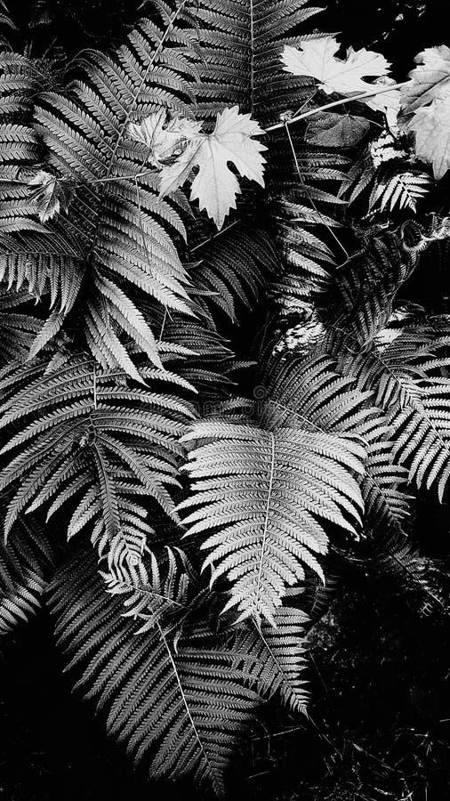Bello fondo floreale della felce e dell'uva verdi delle foglie immagine stock libera da diritti