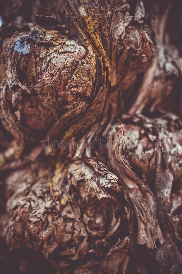 Bello fondo marrone di macrofotografia di struttura della corteccia di albero immagini stock libere da diritti