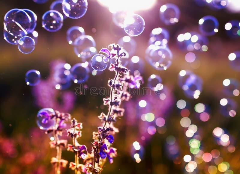 Bello fondo naturale con le bolle di sapone di ribollimento luminose f fotografia stock libera da diritti