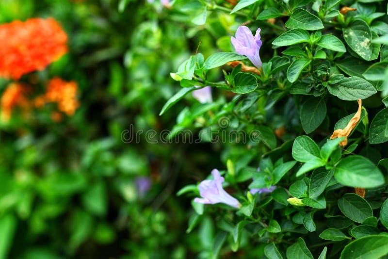 Bello fondo naturale rosso-chiaro della sfuocatura delle foglie verdi e dei fiori di estate Foto per fondo astratto Tono d'annata immagini stock