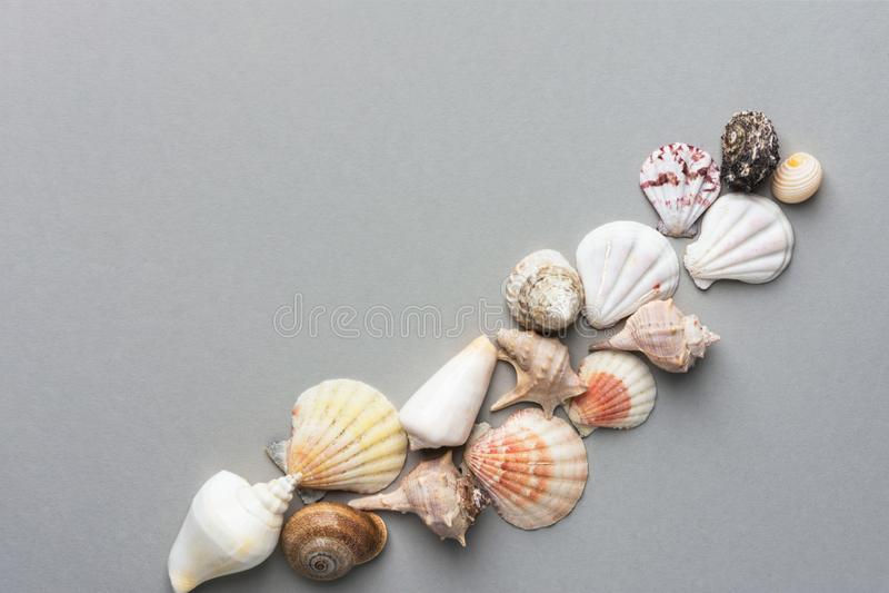 Bello fondo nautico creativo di estate Composizione posta piana diagonale dalle conchiglie dei colori differenti di forme su grig fotografie stock