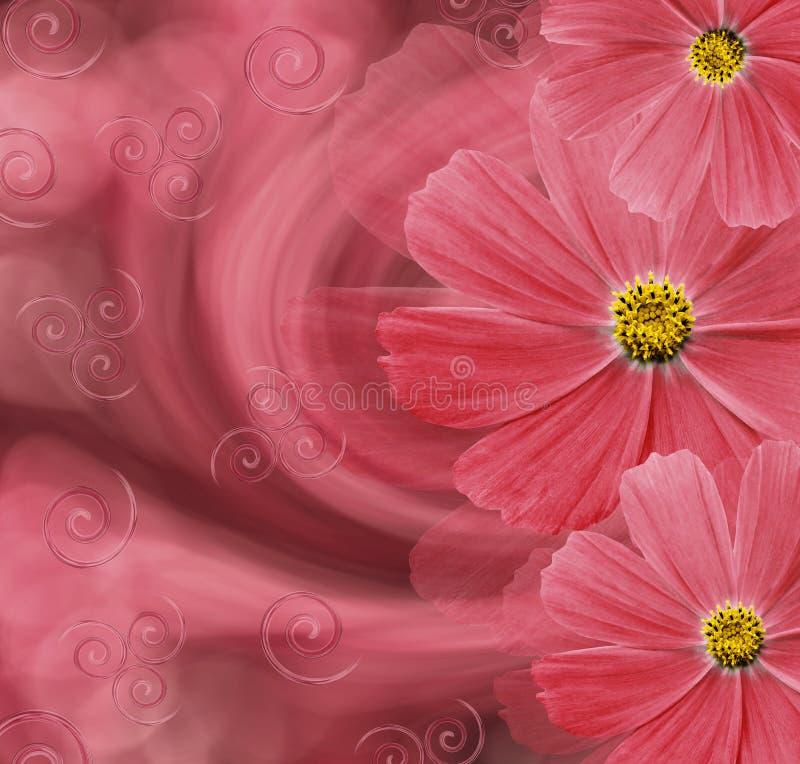 Bello fondo rosso floreale Composizione nel fiore Cartolina con i fiori rossi delle margherite su un fondo rosa-rosso fotografie stock libere da diritti