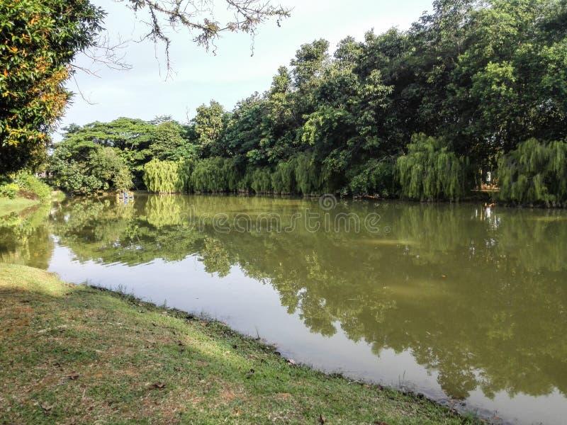 Bello Forest Park fotografie stock