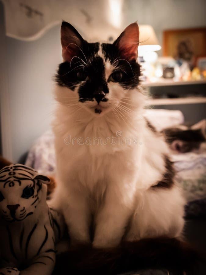 Bello gatto che si siede in una camera da letto fotografia stock libera da diritti