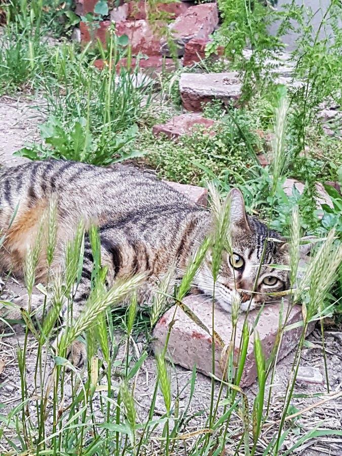 Bello gatto che si trova sull'erba fotografia stock