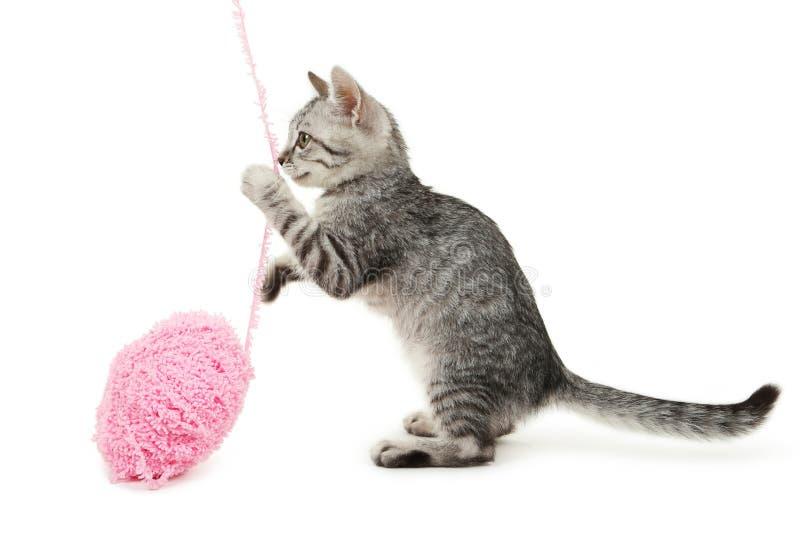 Bello gatto con il gioco della palla isolata su fondo bianco fotografie stock