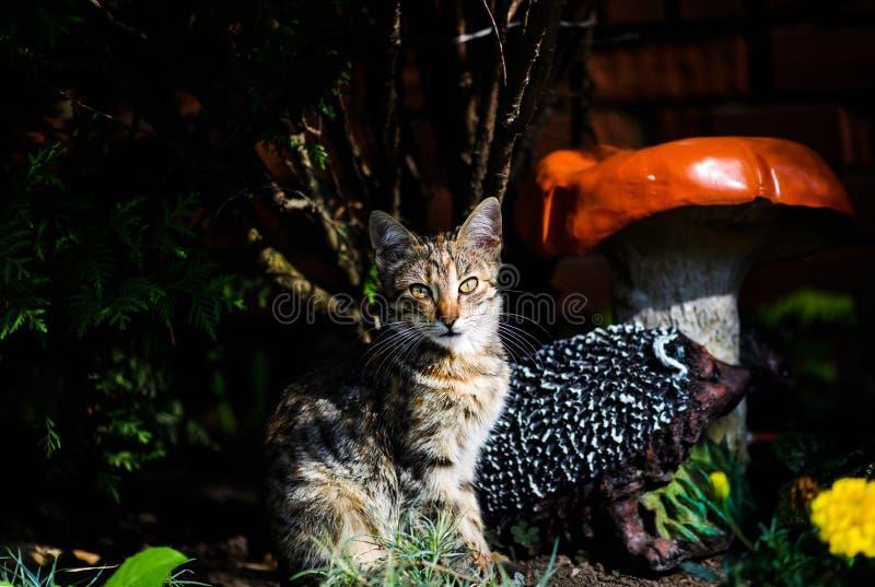 bello gatto fuori fotografia stock