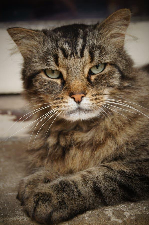 Bello gatto nella via fotografie stock