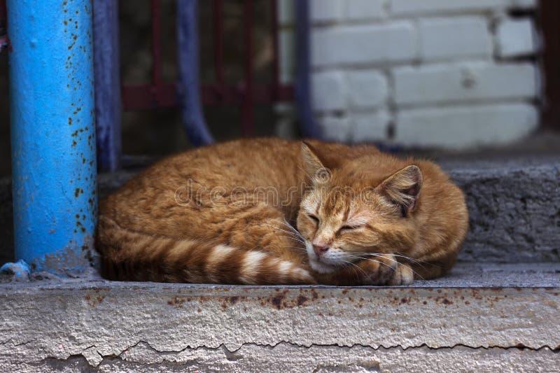 Bello gatto rosso che dorme sui punti vicino all'entrata della casa Riposo dell'animale domestico fotografia stock