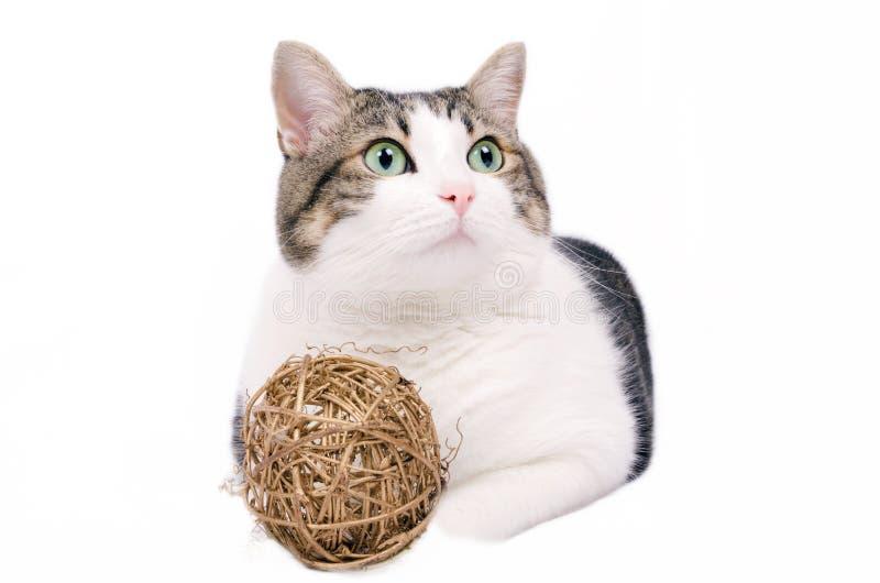 Bello gatto sopra fondo isolato bianco fotografie stock libere da diritti