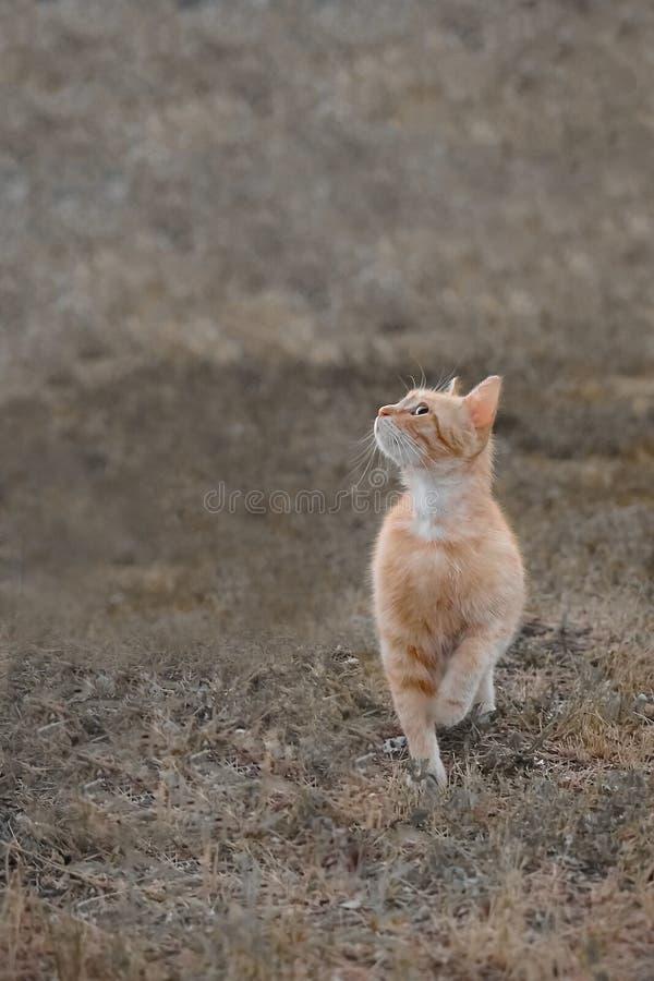 Bello gatto sull'erba Ritratto di un gatto fotografia stock libera da diritti