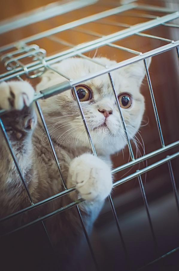 Bello gatto sveglio che si siede in una gabbia immagine stock