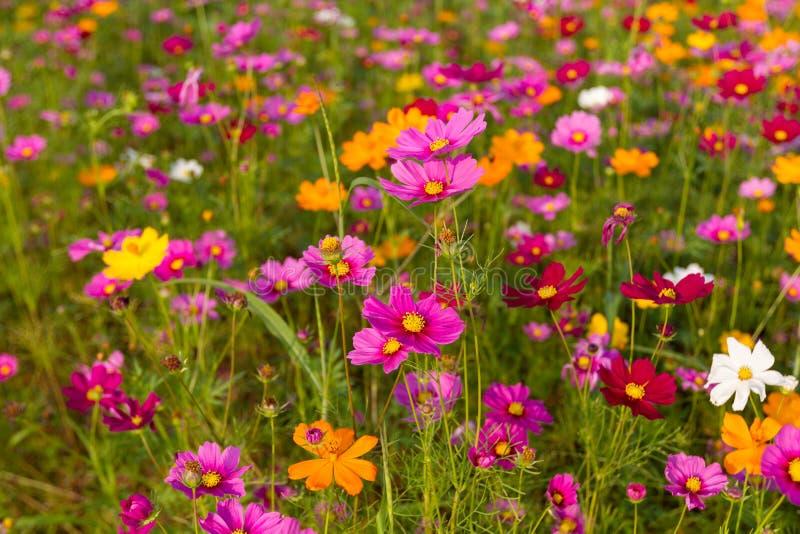 Bello giacimento di fiori multicolore, fondo romantico del fiore e carta da parati, immagini stock libere da diritti