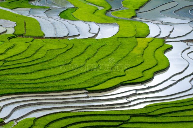 Bello giacimento a terrazze del riso in MU Cang Chai, Vietnam immagine stock libera da diritti