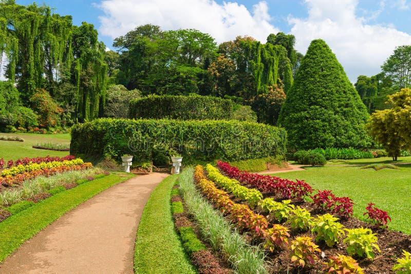 Bello giardino botanico tropicale fotografia stock libera da diritti