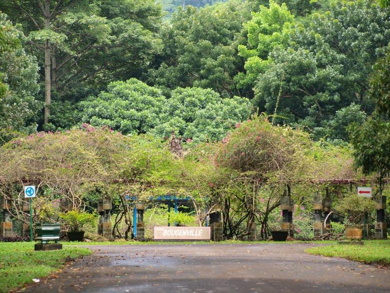 Bello giardino di Bougenville immagine stock libera da diritti