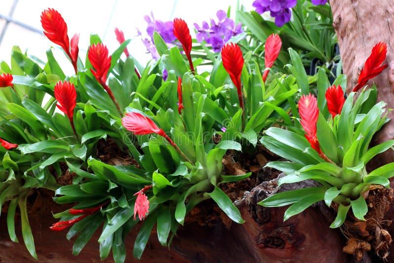 Bello giardino di fiore Fiori variopinti delle orchidee fotografia stock libera da diritti