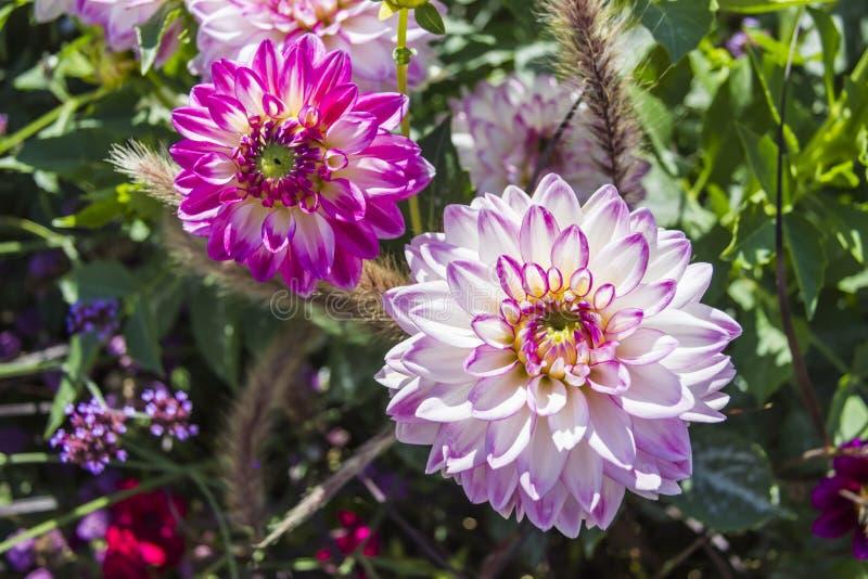 Bello giardino floreale variopinto con i vari fiori immagine stock libera da diritti