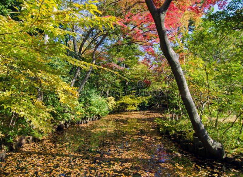 Bello giardino giapponese in autunno, Tokyo immagine stock