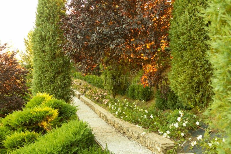 Bello giardino verde immagini stock