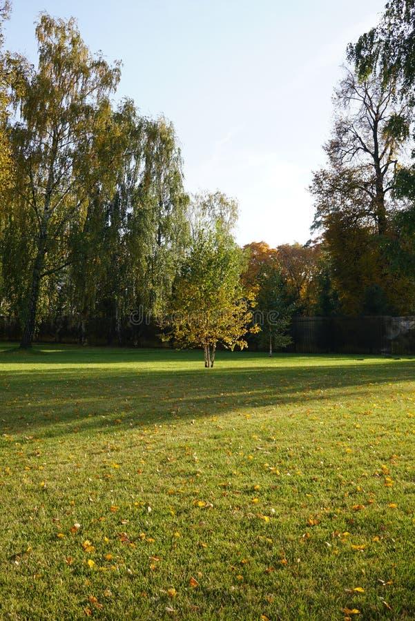 Bello giovane albero di betulla di autunno tre nel centro del campo e della b immagine stock libera da diritti