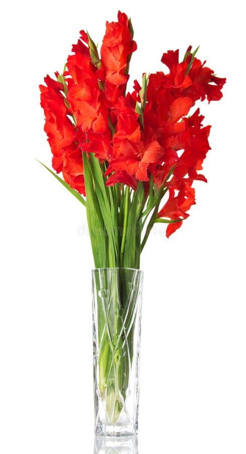 Bello gladiolo rosso in vaso fotografia stock libera da diritti