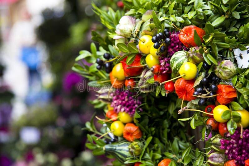 Bello insieme dei germogli di fiore immagini stock libere da diritti