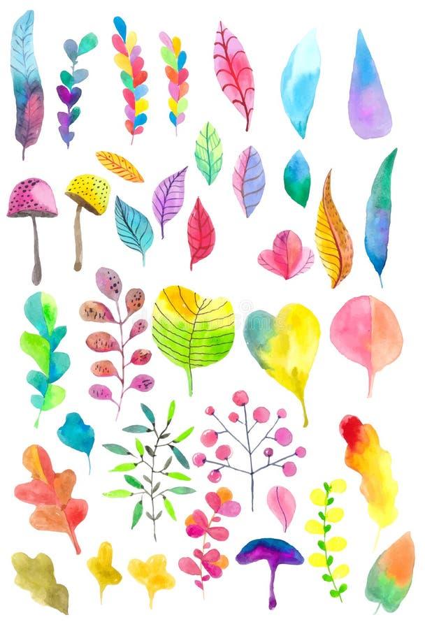 Bello insieme del fiore dell'acquerello illustrazione di stock