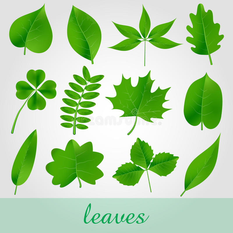 Bello insieme verde naturale dell'icona delle foglie illustrazione di stock