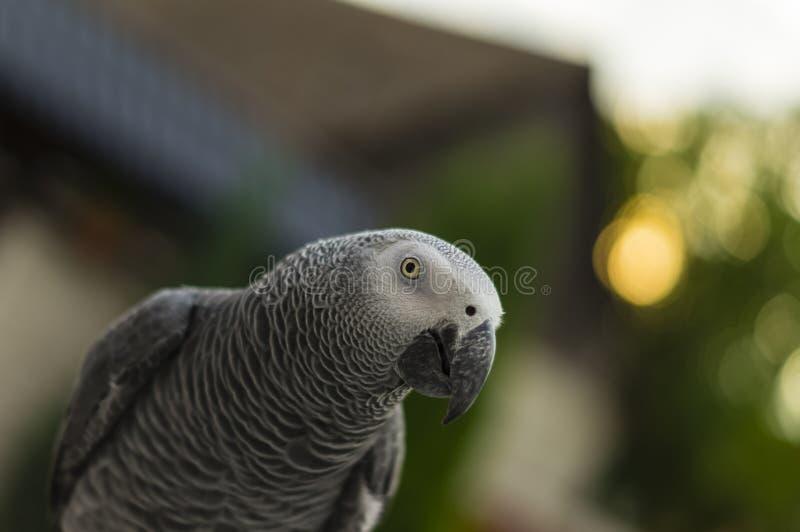 Bello jaco del pappagallo fotografia stock libera da diritti