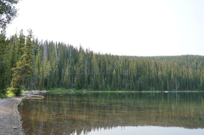Bello lago nel legno fotografia stock libera da diritti